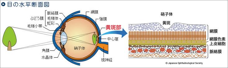 1.網膜モード