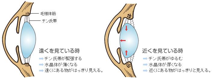 調節の機構